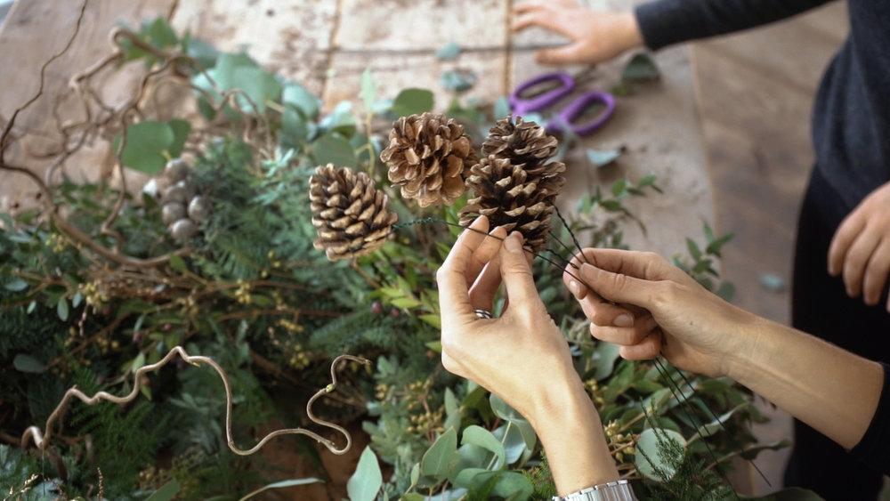 Pine cones 02.jpg
