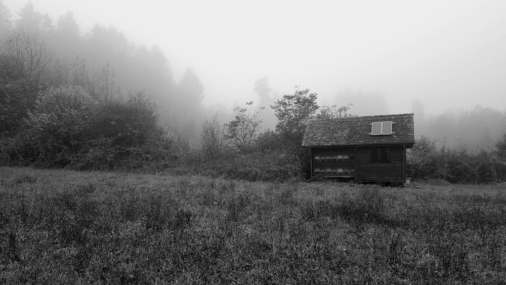 fog-1923403_1920.jpg
