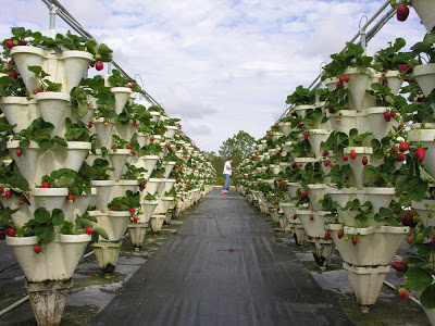 http://thesecondhelpinghouse.blogspot.com/2006/12/hydroponic-farming-in-your-own-back.html