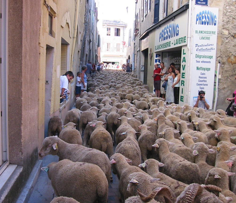 avoid herded financial decisions