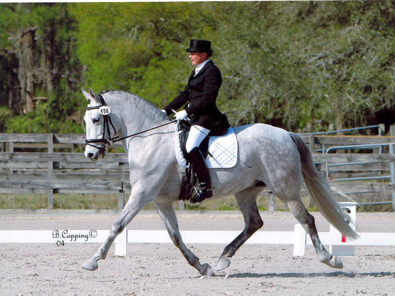 Andalusian, Viva con Brio in FL, Second Level