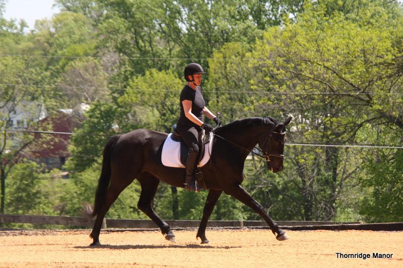 Phoebe on 4yo AHS mare Fabulerian 2011
