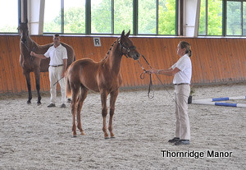 Phoebe & Chuck present Heirloom at 2012 Foal Inspection