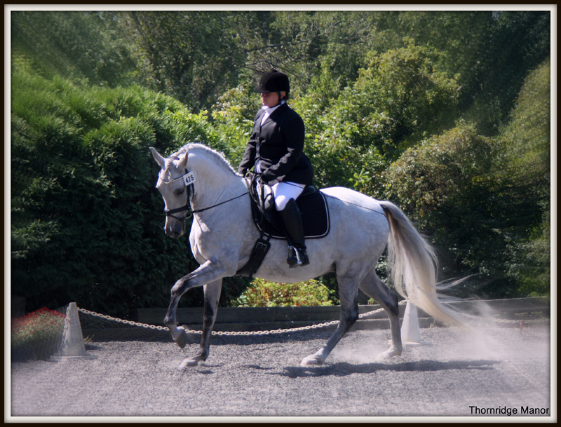 Whimsy - Andalusian Showing Training Level - 2013