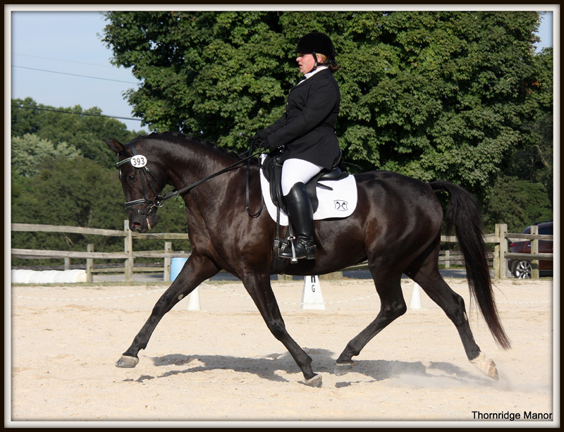 AHS Gelding, Dare to Dream - First Level - undefeated 2013