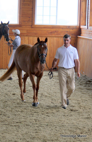 Chuck presenting AHS mare, Legacy of Gold