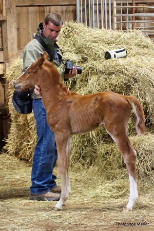 Another foal gravitating toward Chuck -- Victory on Wallstreet.