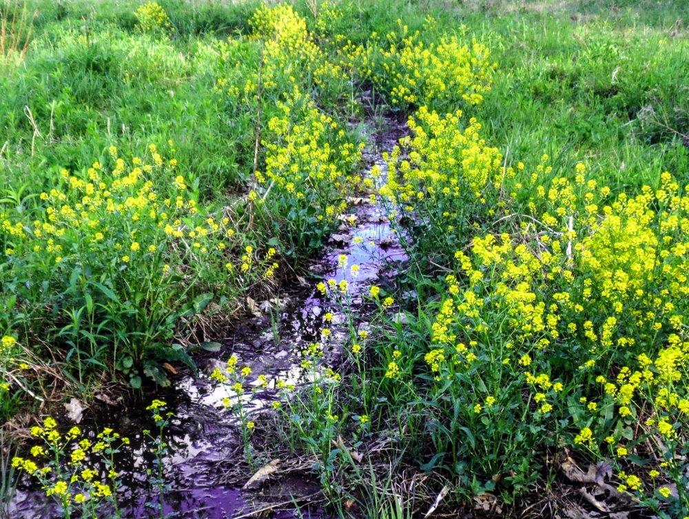 McLemore_Cove_Lookout_Mountain_Georgia_Botanicals_Flowers