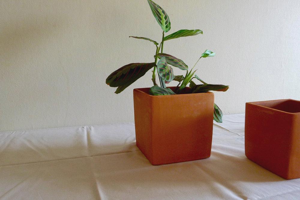 PLANTAR  - ter a natureza em casa