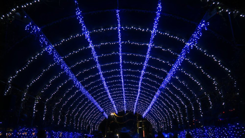Winter Wonderland - Venture out to the border of Spassburg and Crackaxle Canyon as the foliage pathway tunnel features a spectacular array of Christmas lights.
