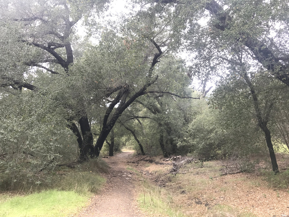 The Oakoasis County Preserve trail guides hikers into oak woodland, one of three habitat types found along the path.