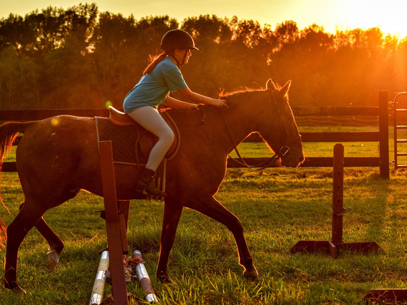 Equine -