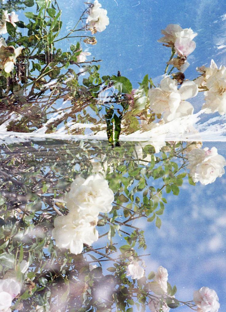 Self Portrait Sequoia, California 2018