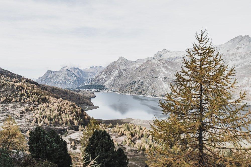 Lake_forest_Switzerland.jpg