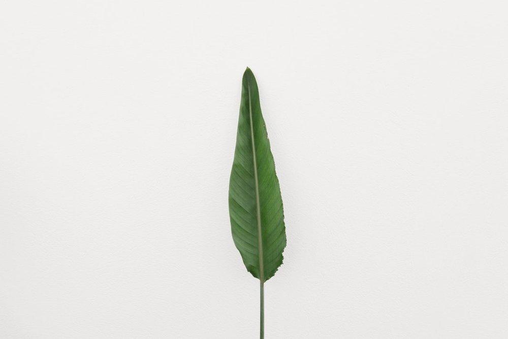 Green leaf white background.jpg
