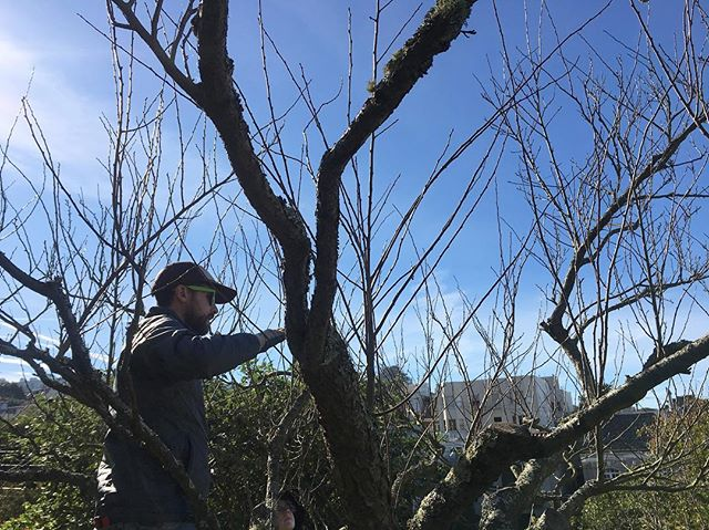 It's been a wonderful week in the Bay teaching pruning, gardening, and photographing with @revelhana (📷) @kelleybee.p @maggygee @trinabeegardening and so many more. Until next time!