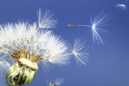 DandelionMom-Image.jpg