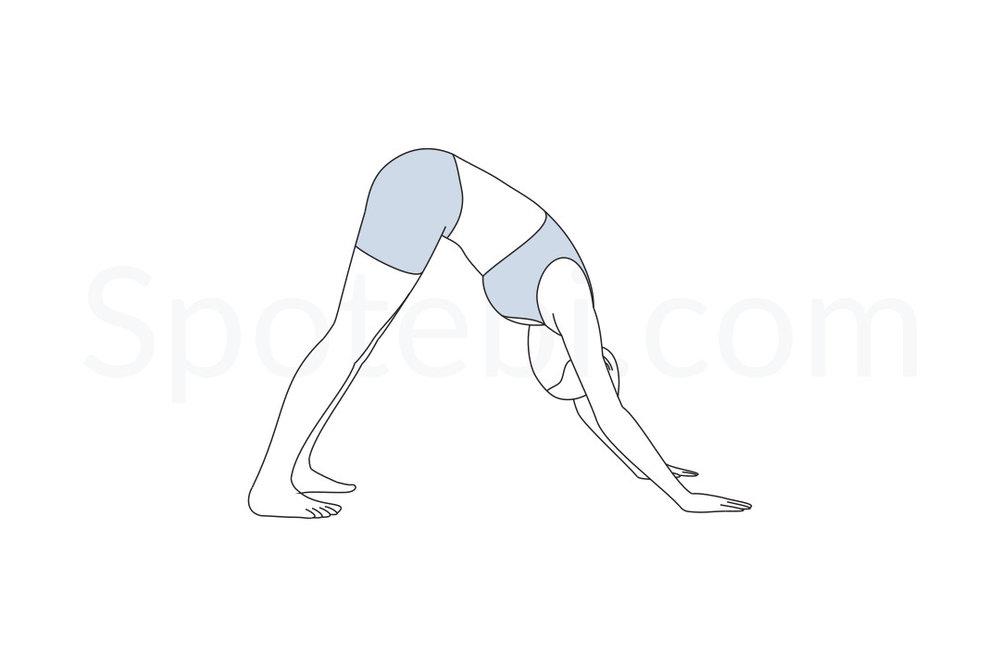 3. Downward Dog Pose -