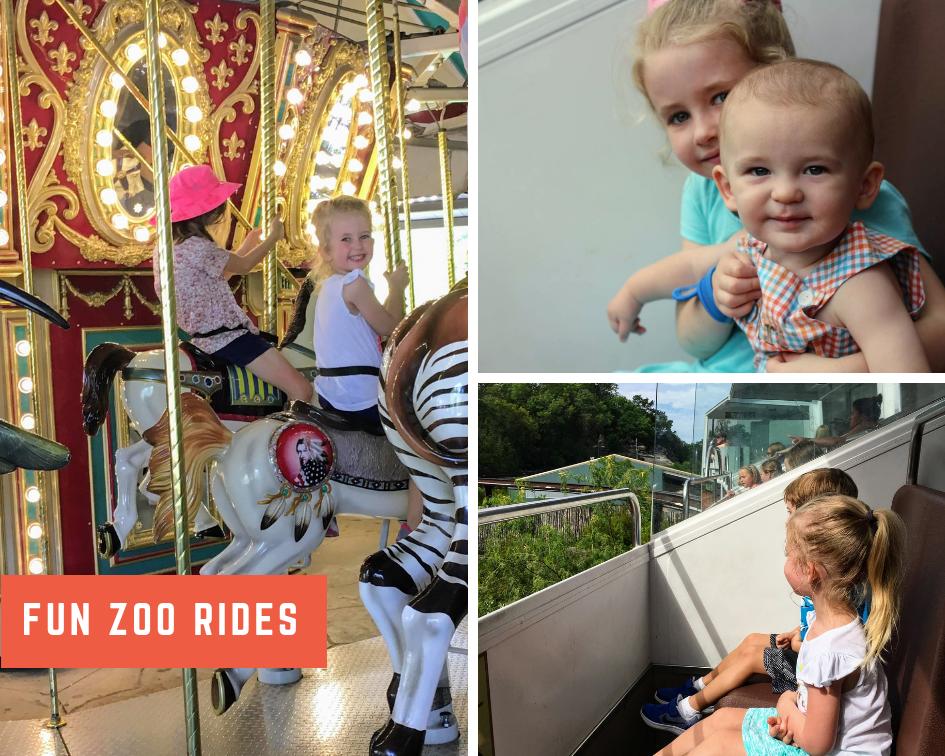 Fun Zoo Rides.png