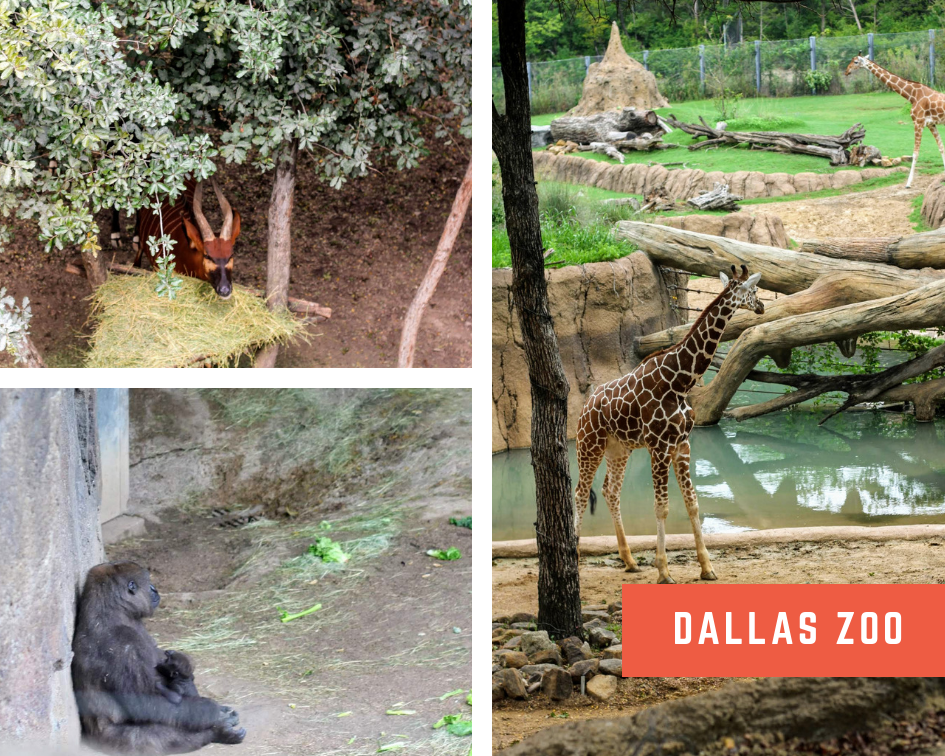 Dallas Zoo 3.png