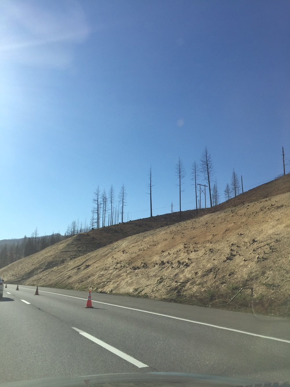 The hillside after the Delta Fire. They were still cutting trees and doing erosion control.