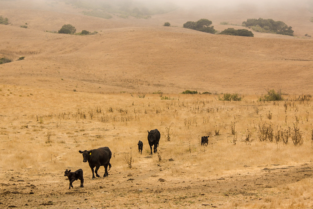 TheRanchTable_Calving-23.jpg