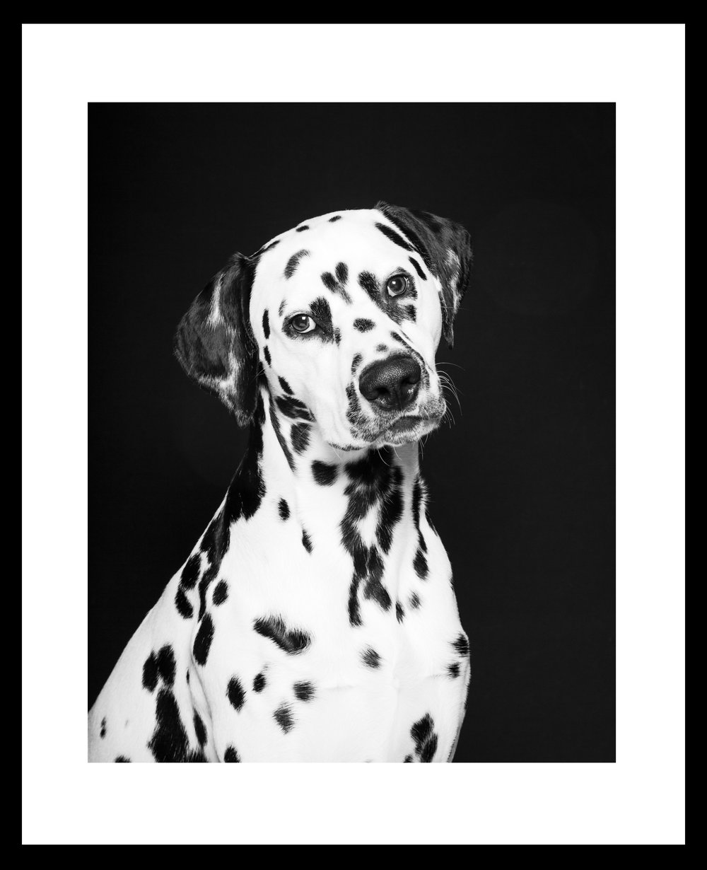 - Take the photograph at a location of your choosingProduce a contact sheet of the resultsReview and advise on selection and print sizesDeliver a printCreate bespoke montages, triptychs