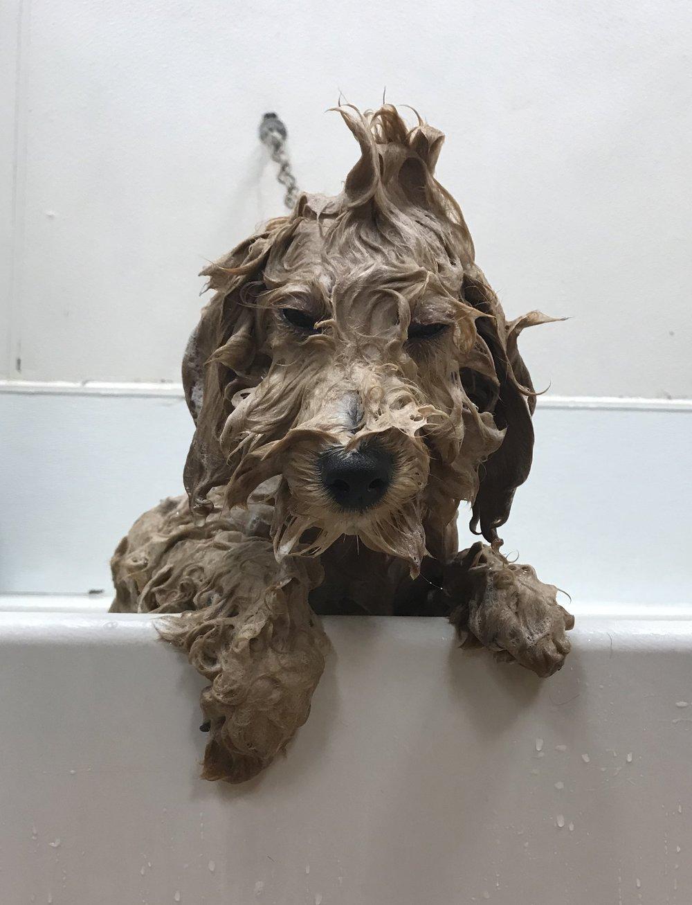 wet dog - grooming page.JPG