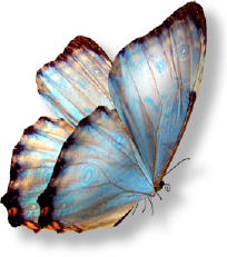 BW - Butterfly 1.png