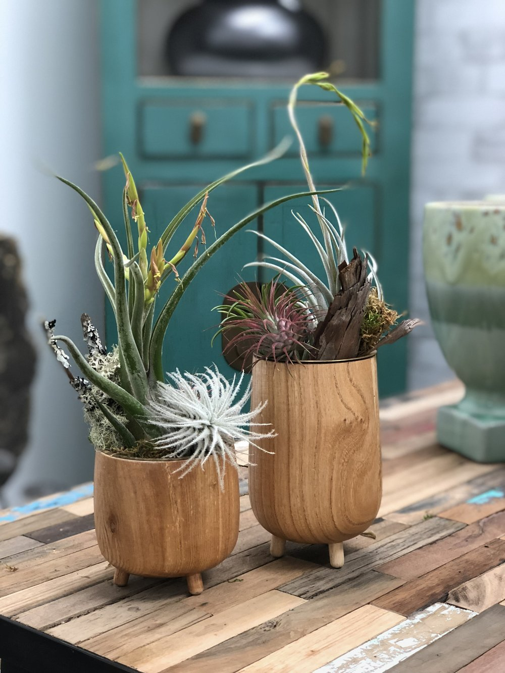 Tillandsias in roost containers.jpg