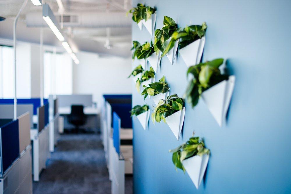 Wall Planters.jpg