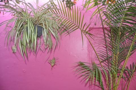 Oaxaca 8.jpeg