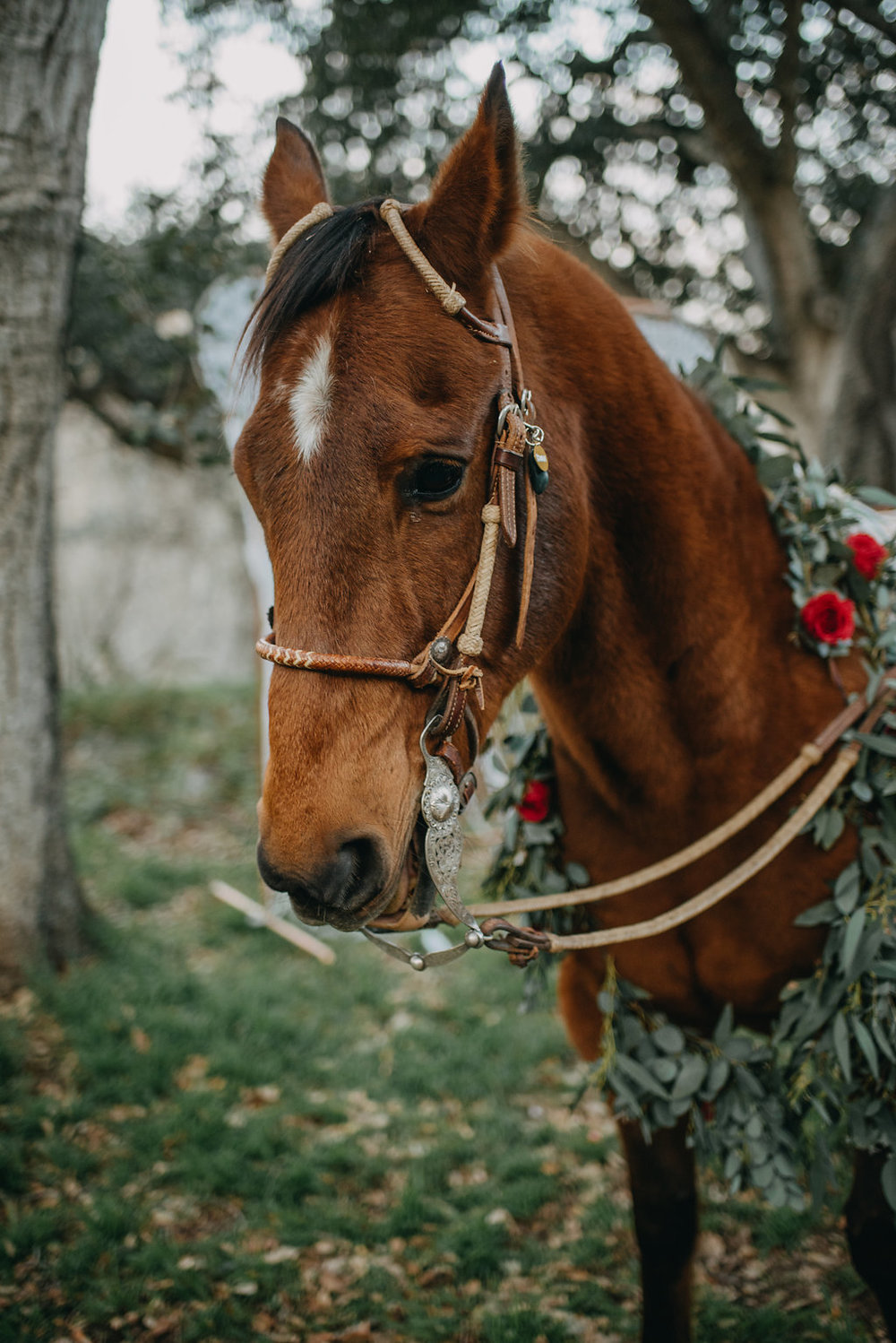 gorgeous horse boho wedding photo idea