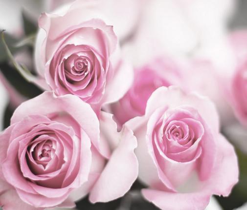 Flowers-2_cropped.jpg