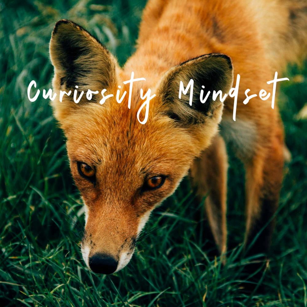 Curisity Mindset/Learner Perspective