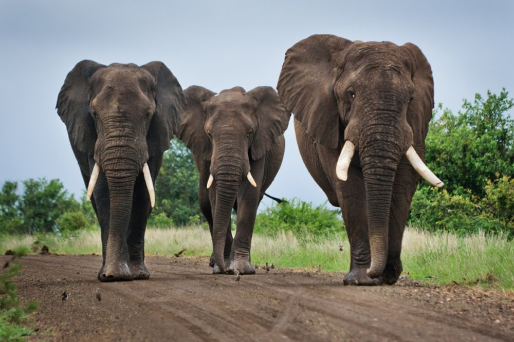 Paul's presentation explores how to make your learning initiatives 'elephant proof'! -