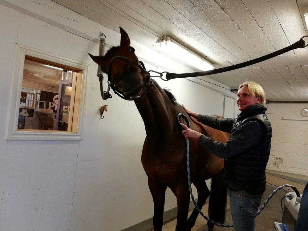Equitron terapia hevosille | Tarttila, Valkeakoski