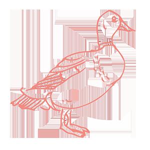 Ducks — ferme réservoir