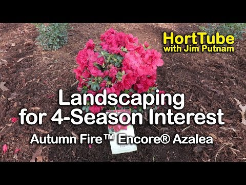 Azaleas Horttube With Jim Putnam