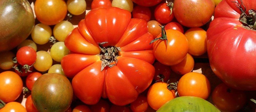 Tomatoesbanner.jpg