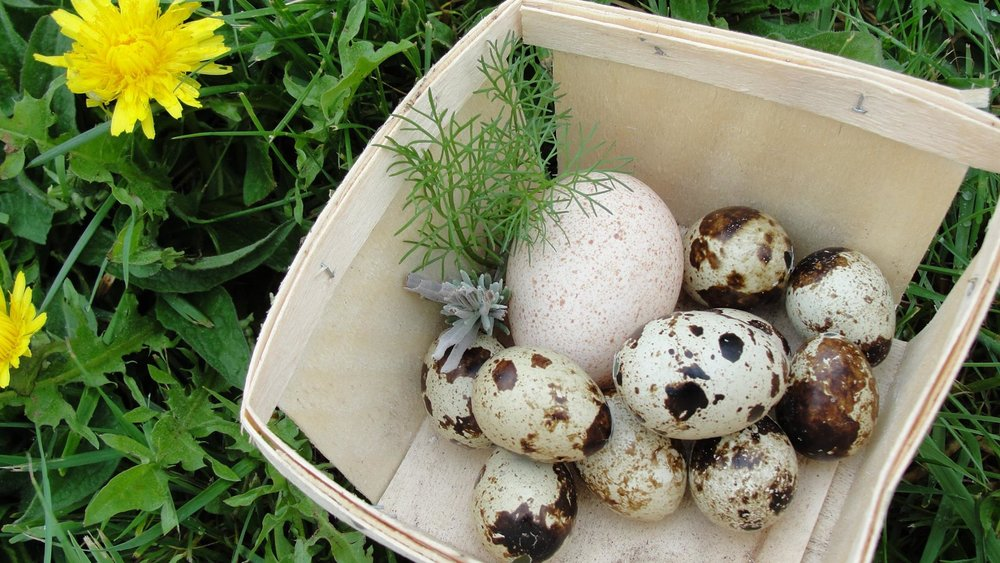 Quail and turkey eggs