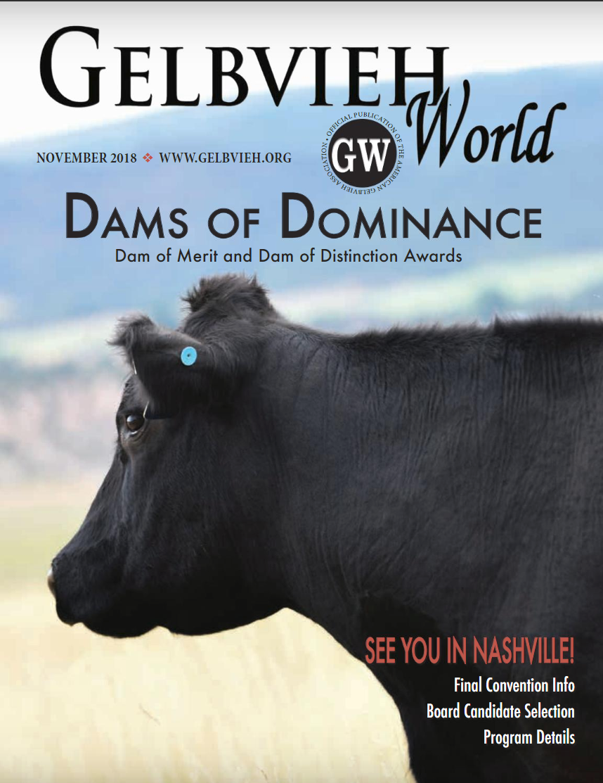 Holle Gelbvieh Ranch Herd Genetics