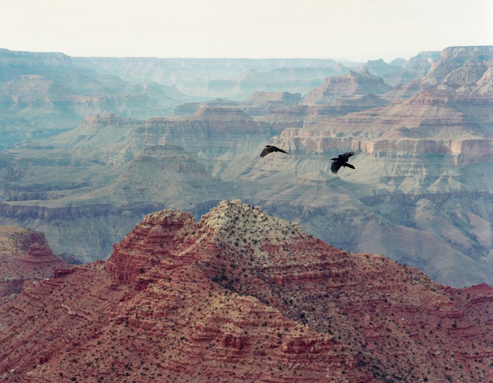 GC_Birds.jpg