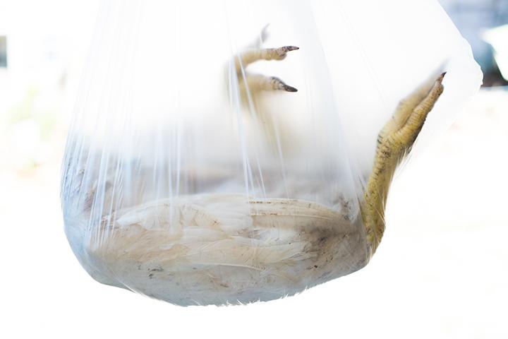 chickenbag_©LindaPugliese