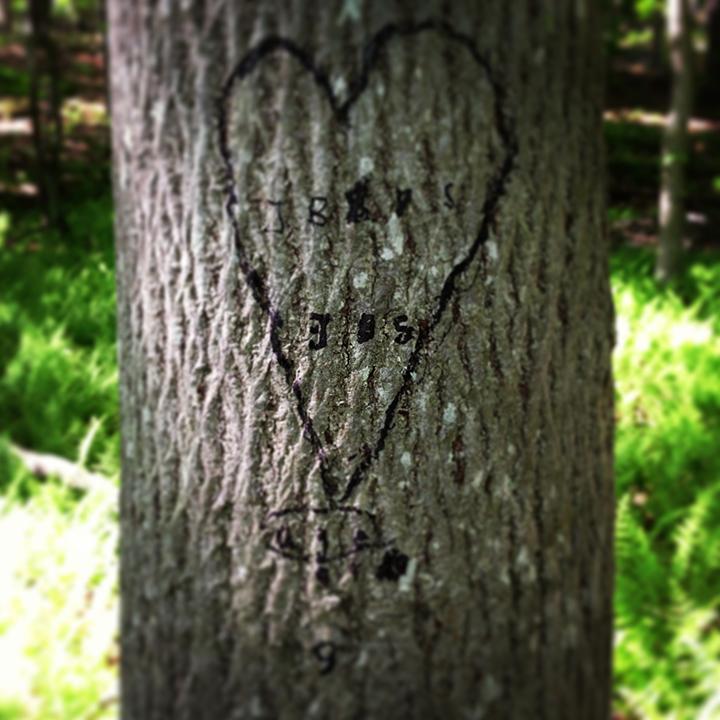 Treedrawing_©DimityJones