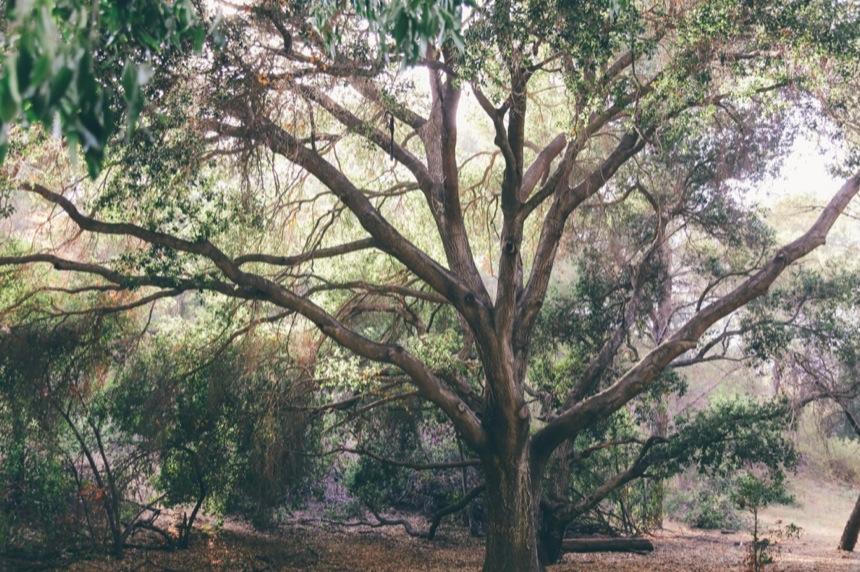Griffith Park Engagement 6