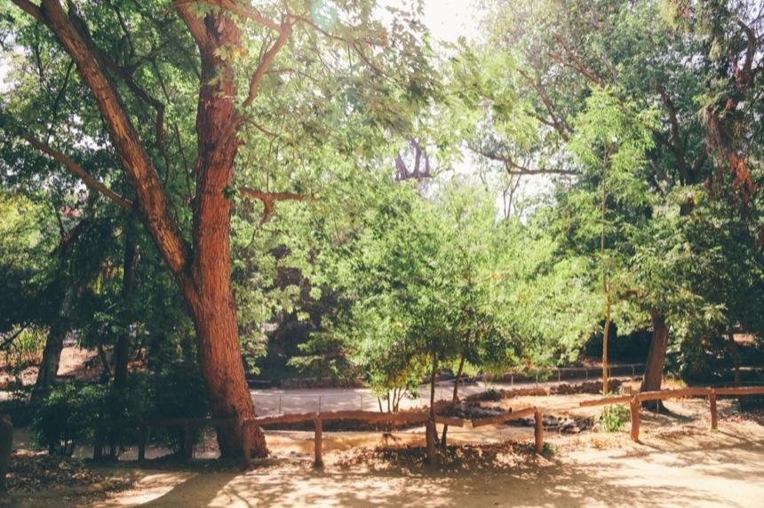 Griffith Park Engagement 13