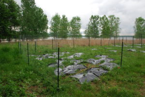 Experimental tree plot at Pig's Eye