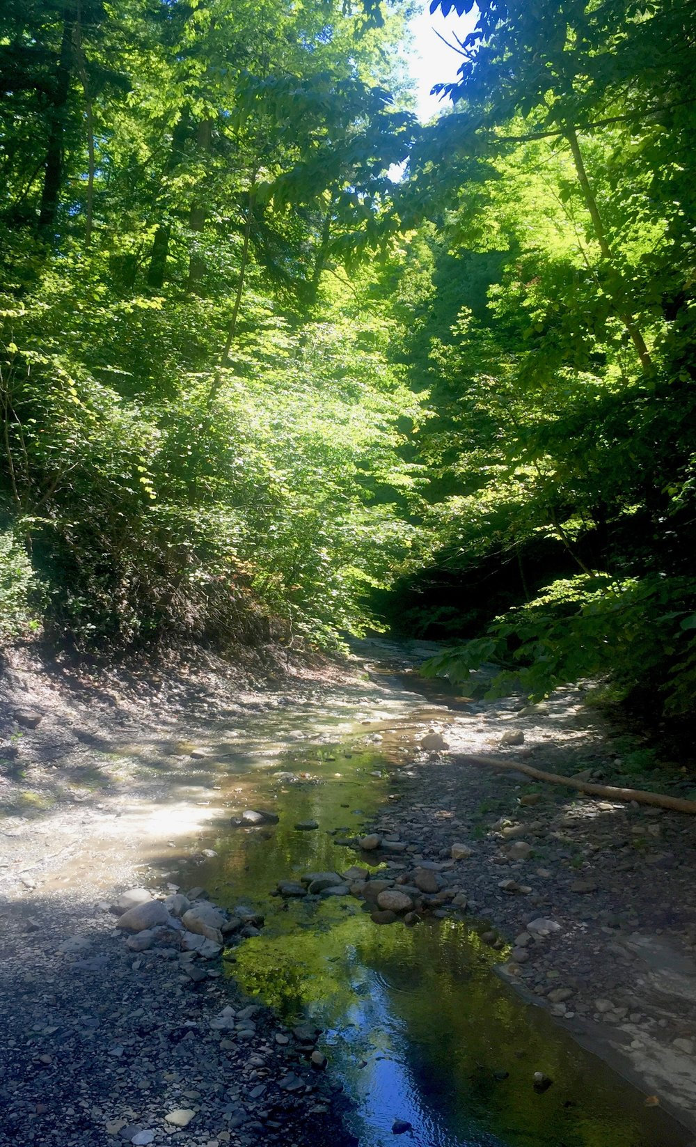 The brook in high summer when the water is at its low point.