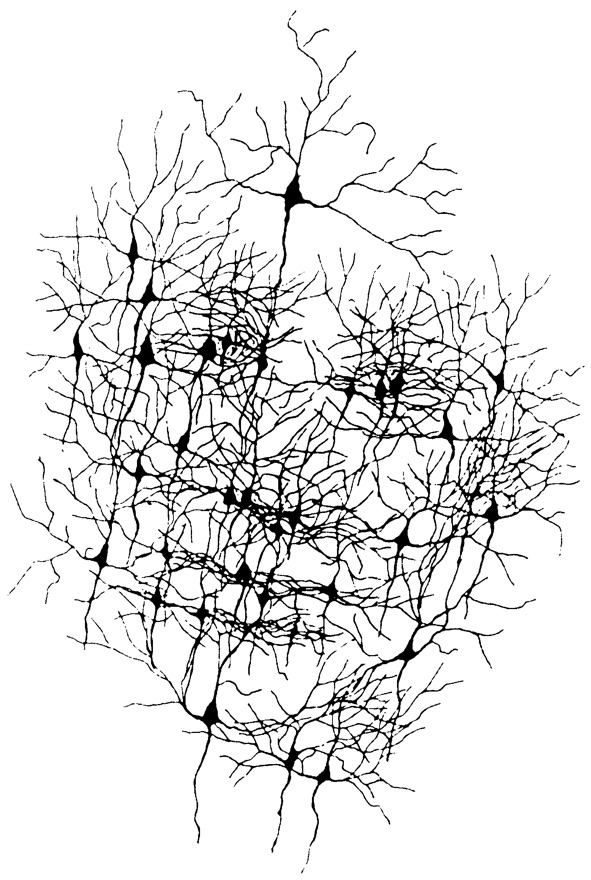 face neuron.jpg
